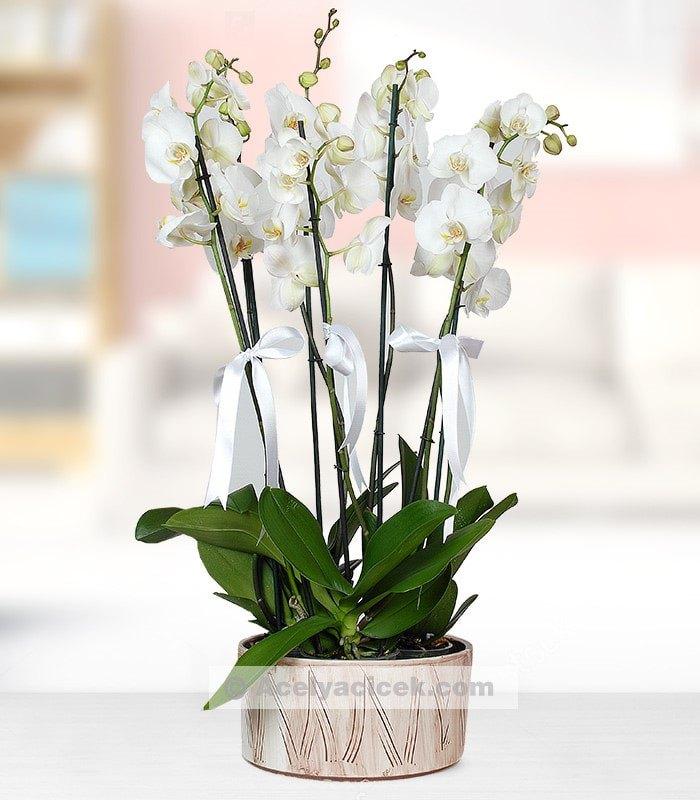 5 Dal Süper Orkide