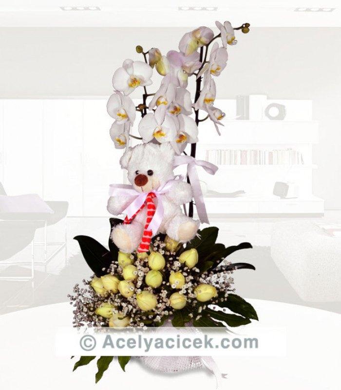 Orkide Gül Dünyası