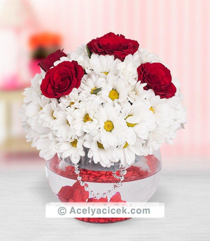 Fanus Kır Çiçeği