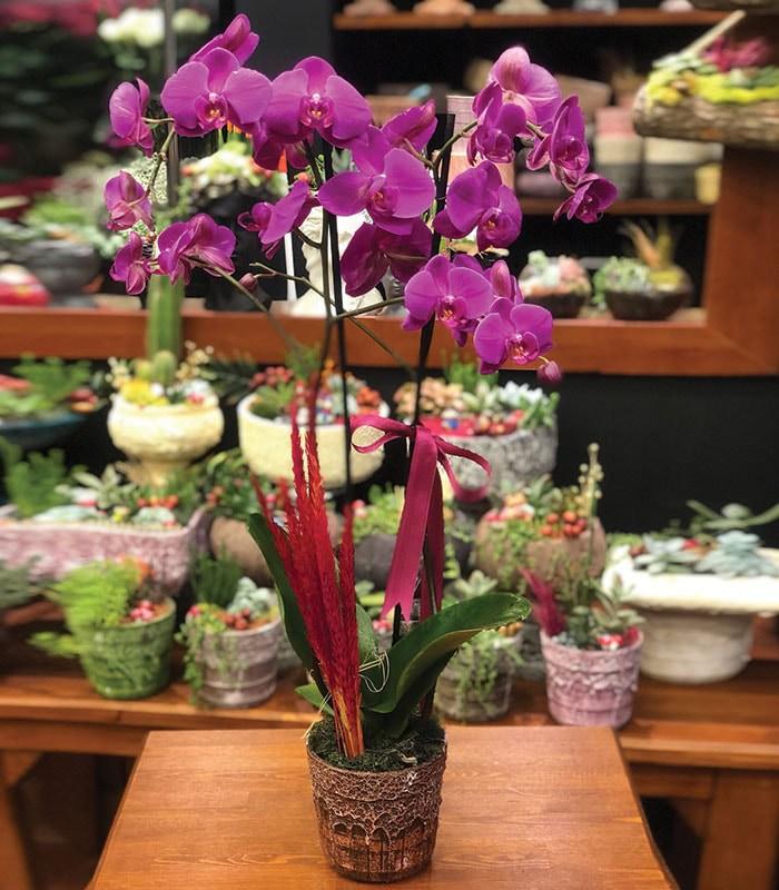 Hayatımın Aşkına Orkide