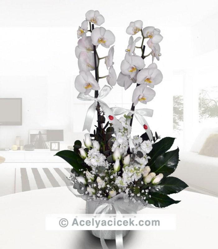 Süper Orkideli Arajman