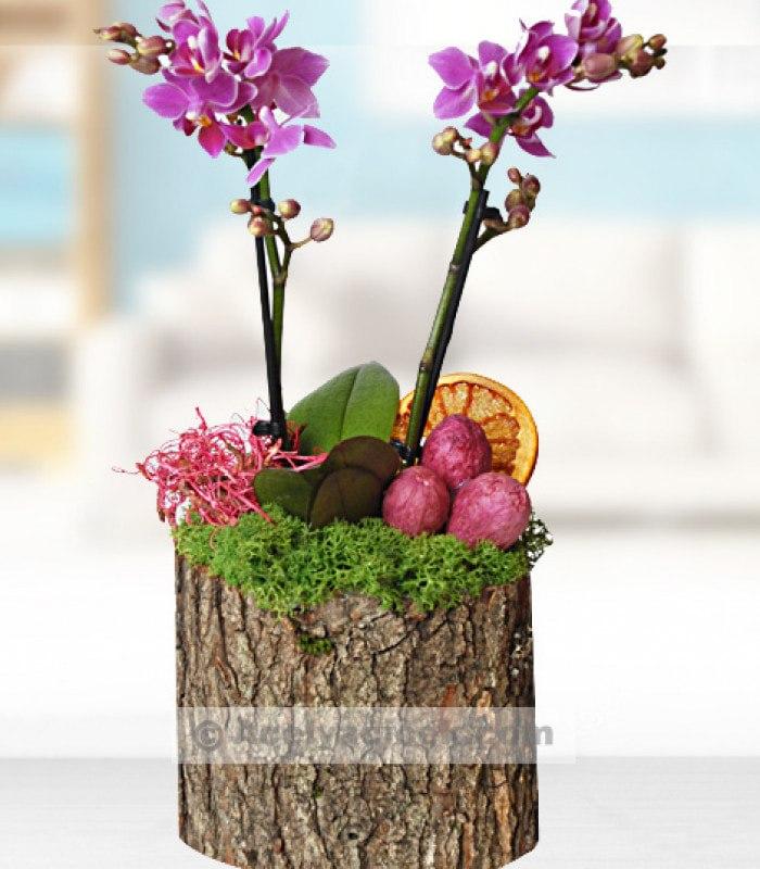 Kütükte Minyatür Orkide