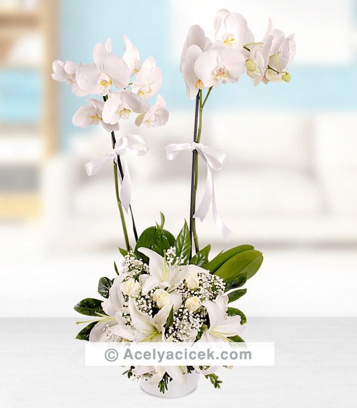 Orkideli Beyaz Dünya