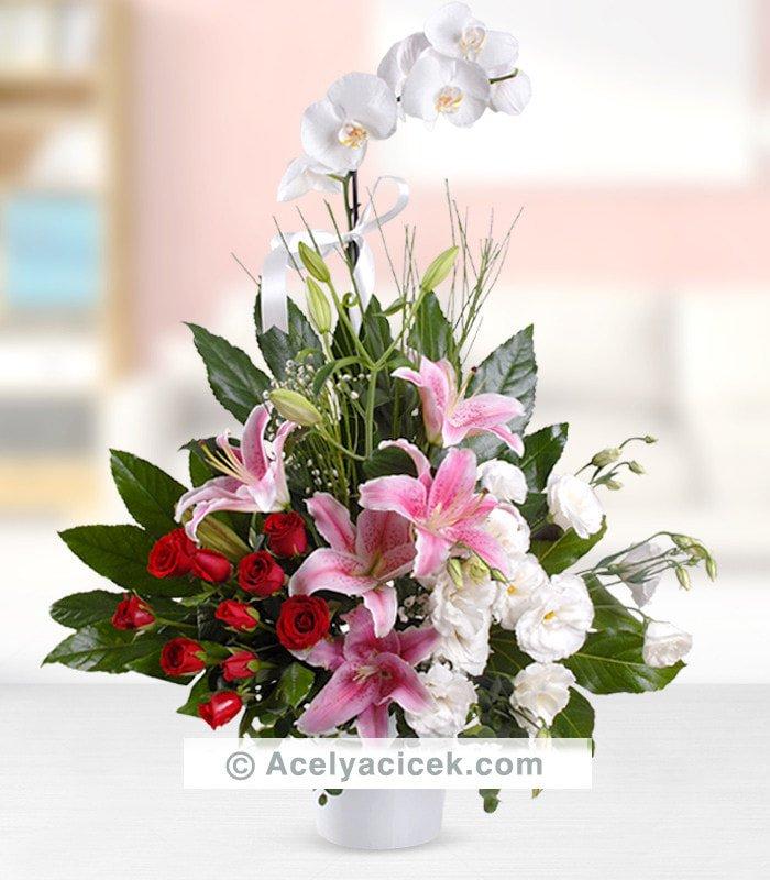 Orkideli Hediyeli