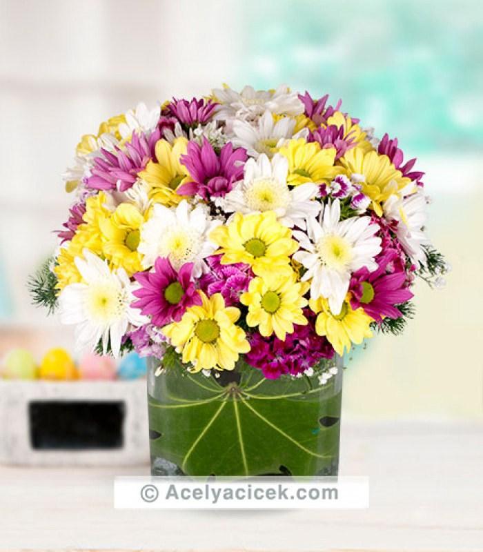 Mevsim Çiçeği