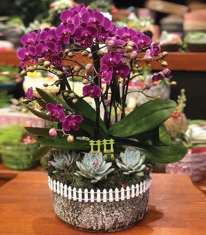 Polinoptus Fuşya Mini Çiçekli