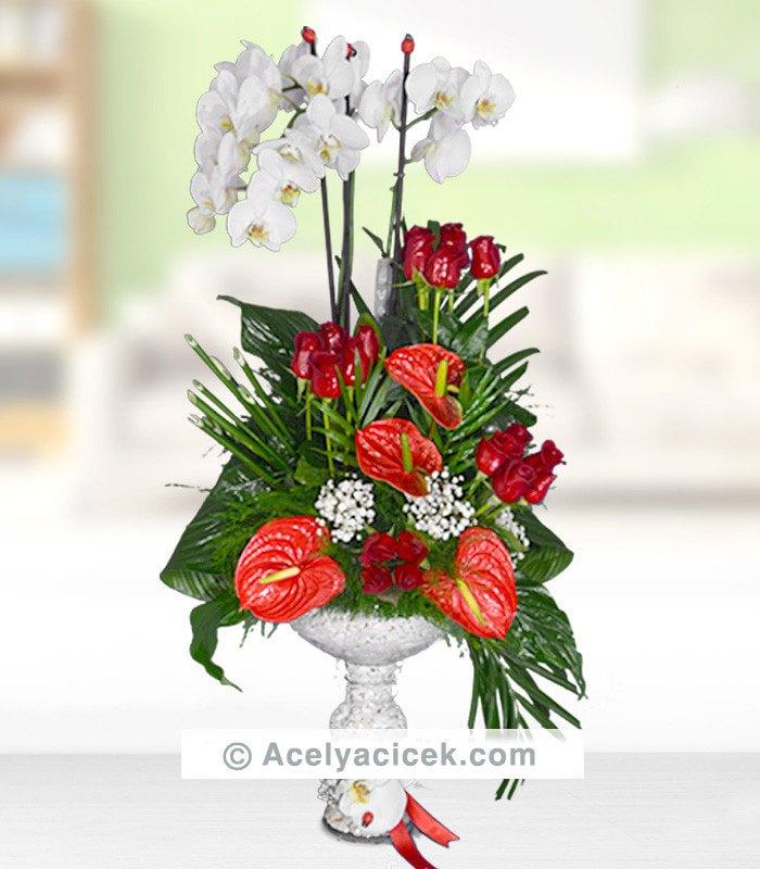 Orkide Antoryum Buluşması